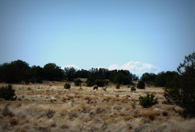 01 Headwater Ranch -- Chino Valley AZ 86323