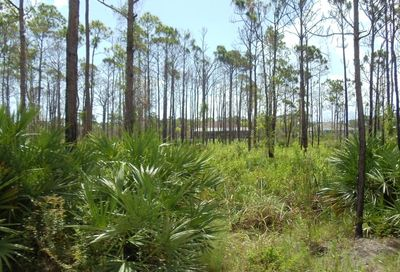 Tbd Tree Top Trail Fort Pierce FL 34951
