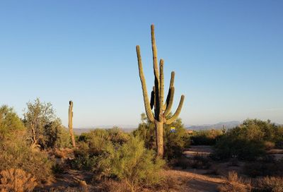 163xx E Lone Mountain Lot 166 Road Scottsdale AZ 85262