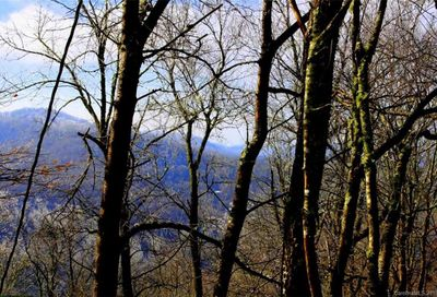 254 Grouse Thicket Road Mars Hill NC 28754