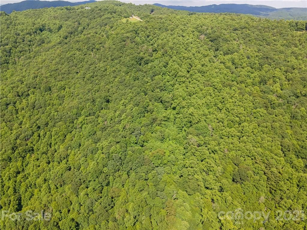 21.56 Acres Cabbage Patch Road