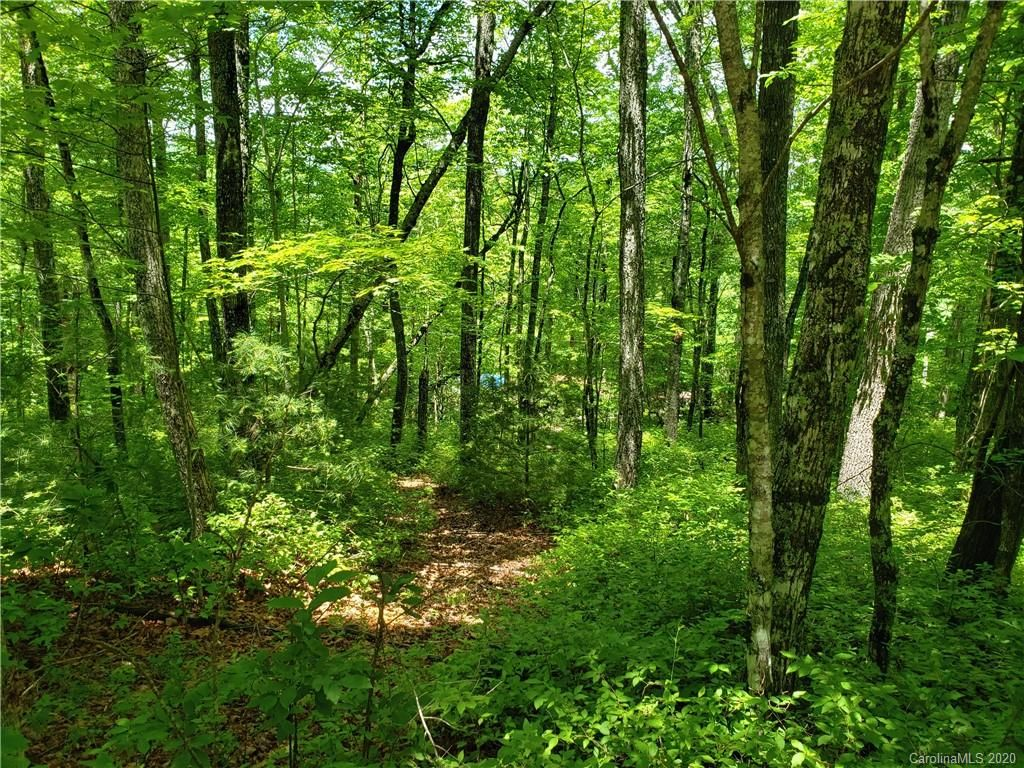 Lot 10 Forest Trail