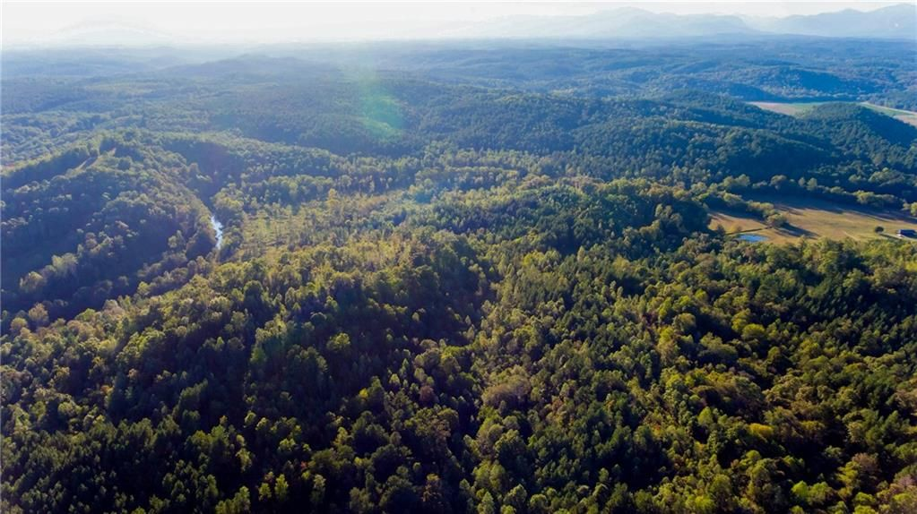 233.5 Acre Tract On Jay White Road